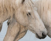 The Power of Two - Fine Art Horse Photograph - Horse - Camargue