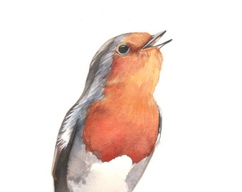 Robin Original watercolor painting A4 size