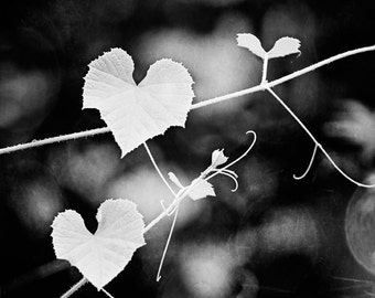 "Heart Shaped Leaves Photo, love leaf nature wall art photo botanical print dark grey picture gray photograph, ""For the Love of Nature"""