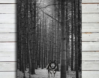 Big Bad - Wolf art - Wolf photography - Dog photography - Dog art - Big bad wolf - Wolf canvas - Wolf wall art - Black and white wolf.