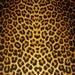 """Leather 12""""x20"""" or 10""""x24"""" or 15""""x15"""" OCHRE Large Cheetah / Leopard Print Cowhide NOT Hair-On 2-2.5 OZ / .8-1 mm PeggySueAlso"""