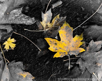 Autumn Photograph, Yellow Leaf Photo, Black and White With Color, Yellow Decor, Nature Photography, Leaf Art, Fall Decor, Yellow Art Print