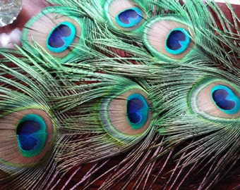 """Peacock Feather Bundle, 5 Large 3.5 Inch All Seeing Eye Feathers, 18"""" long, Naturally Shed, Craft feathers,Center pieces, Corsage, Bouquet"""