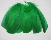 Goose Shoulder Feathers - Green