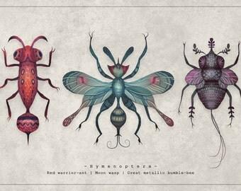 The Hymenoptera - A4 Art print