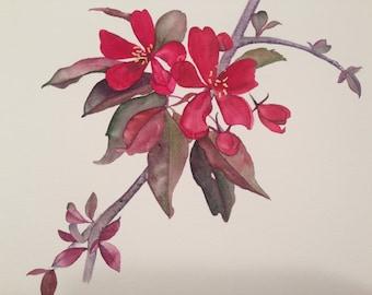Red flowering Crab