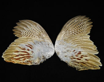 """11-13"""" Pheasant wings Taxidermy bird avian pair feathers wing feather set WING04"""