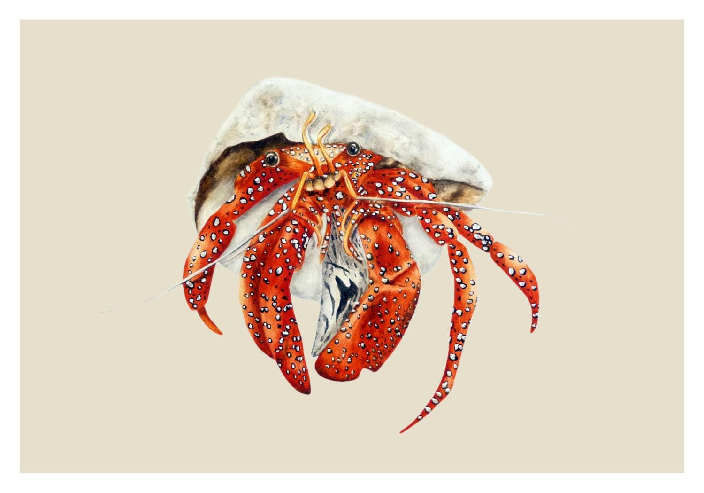 Hermit Crab Print ocean wall art nautical painting Hermit Crab Art
