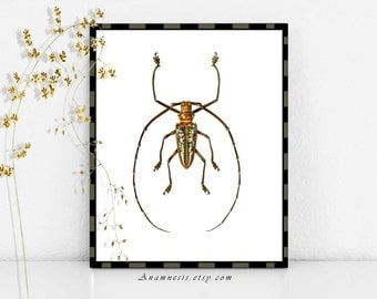 BEETLE - digital image download - printable antique insect illustration retooled for image transfer - totes, pillows, prints, fabric, tags