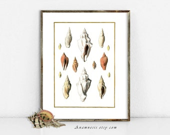 VOLUTE SEA SHELLS - digital download - printable antique illustration for framing, totes, cards, t-shirts etc. - lovely sea life wall decor