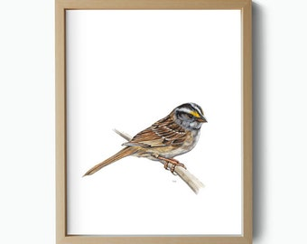 Art Giclee Print White-throated Sparrow