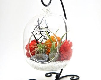 Air Plant Terrarium Kit With Geode Crystal / Sunburst On Ice