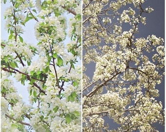 By Day and By Dusk, Floral, Cherry Blossoms, Spring, Fine Art Photography, Wall Decor, SET OF TWO