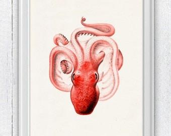 Vintage octopus n4 -Wall decor poster  , sea life print- Orange octopus vintage illustration SPOJ065