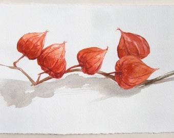 Winter Cherry painting. Watercolor painting original. Small watercolors 7,5 by 11''/ Plant illustrations. Orange red watercolor/ Home decor