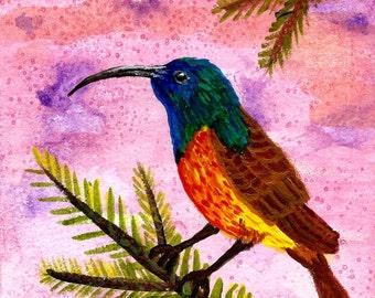 Wall Art, 8 x 10 Art, Art Print, Songbird, Watercolor Art, Bird Art, Wildlife Art, Animal Art, Orange Breasted Sunbird, Item #SBP-2015