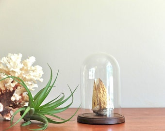 Vintage glass dome, display / cabinet of curiosities