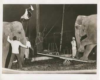 Circus acrobats with elephants on stage vintage photo