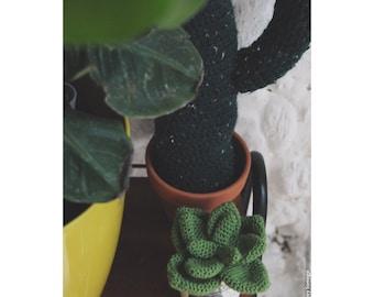 Large succulent crochet