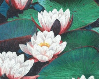 Medium Print from an Original Pastel painting of a group of white waterlillies
