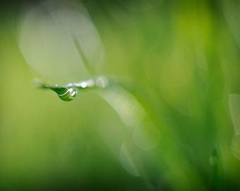 Green Grass Dew Drop Photograph, Water Drop and Bokeh Minimal Photography, Green Wall Art Nature Home Decor, Abstract Macro Photo Print