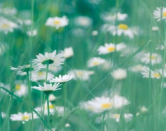 Wild Daisies - Teal and Yellow