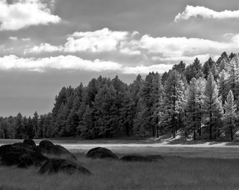 Black and White, Landscape Photography, Nature Photography, Black and White Wall Art, Woodland Decor, Forest Photo, Living Room Wall Art