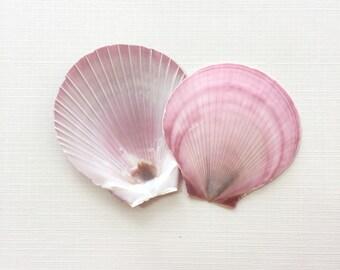 "Pink and Purple Sun and Moon Shells - 2""+, (12 pcs) Beach Decor"