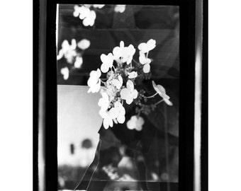Hydrangea Photogram - Hand-Printed B&W Photograph - Ready to Frame Wall Art