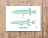 Northern Pike Art in Green -Fishing Print Pike Art Lake House Nautical Decor Ocean Wall Decor Lake Art Home Decor Gift For Dad Father's Day