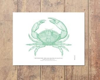 Stone Crab Art in Green - Beach Decor Nautical Decor Crab Print Ocean Wall Decor Beach Art Nautical Print Gifts For Dad Ocean Home Decor