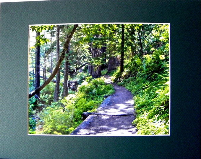 GREEN FOREST Wall Art, Fine Art Photography, Home, Cubicle or Office Decor, Frame-Ready, 2 Mat Choices