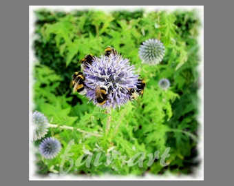 """Photo """"Thistle with bees"""" 13x13 cm with mini easel"""