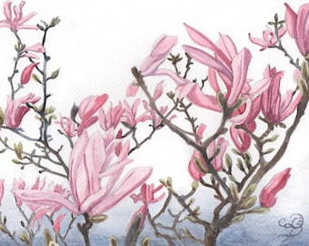 Pink Magnolia, ORIGINAL watercolor painting, FREE shipping