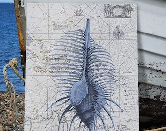 Blue Seashell art print on Nautical Map Print 2 - Shell wall art sea shell print nautical bedroom art Bathroom wall art Bathroom wall decor