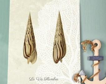 Seashell print - La Vis Flambee Shell, Sea shell art print Shell wall art sea side décor seasideprint Seashell Illustration Coastal art