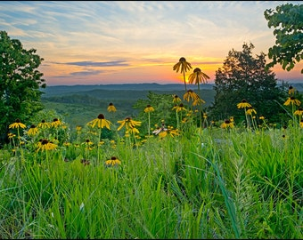 Nature Photography, Coneflower, Yellow, Flowers, Henning Glades, Glade, Floral, Sunrise,