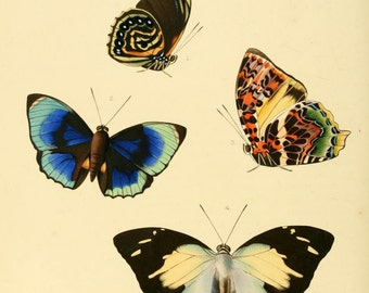 Vintage Reproduction Print Agrias and Nymphalis Exotic Butterflies A4 Natural History Entomology