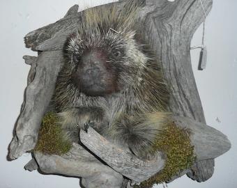 Porcupine Shoulder Mount