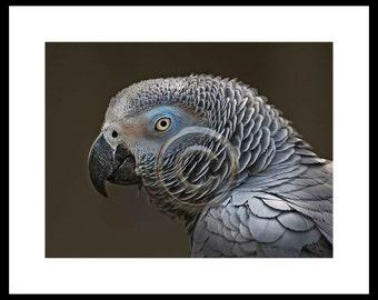 Parrot,Inkjet print  9x7 image on 14x11 archival paper