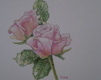 Limited edition colour print of pink roses pencil drawing