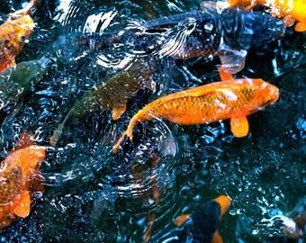 Orange Koi -Digital Photography, Koi Water Photograph, Koi Photography, Koi, Fish, Pond, Reflection, Orange Fish, Fish Photography, Koi Pond