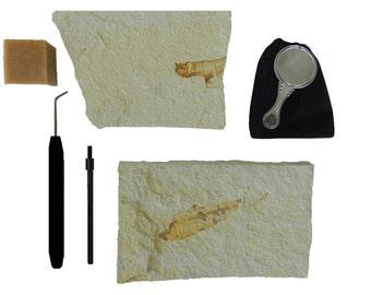 Fish Fossil Preparation Kit
