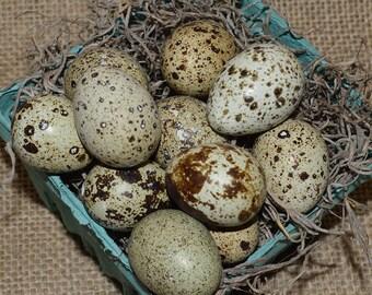 Blown Coturnix Quail eggs  - one dozen plus extras - single 3/16 hole