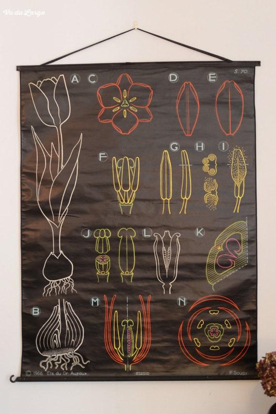 affiche murale scolaire vintage auzoux sougy la tulipe. Black Bedroom Furniture Sets. Home Design Ideas