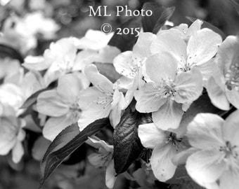8X10 B&W landscape photograph