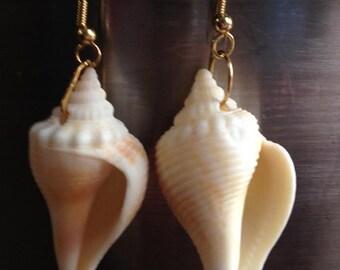 Conch Shell Earrings