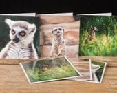 "Photo Greeting Card Set of 3 Animal Furry Masked Faces  5"" x 5"" Cards - Blank Inside"