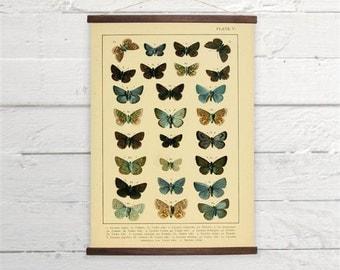 Vintage Butterflies Blue Brown Natural History Canvas Poster Print Wooden  Wall Chart Size A3 16x11