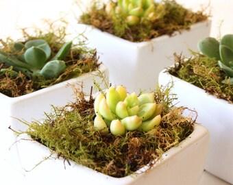 Succulent Wedding Favor in White Ceramic Pot - Set of 10
